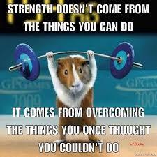 hamster lifting